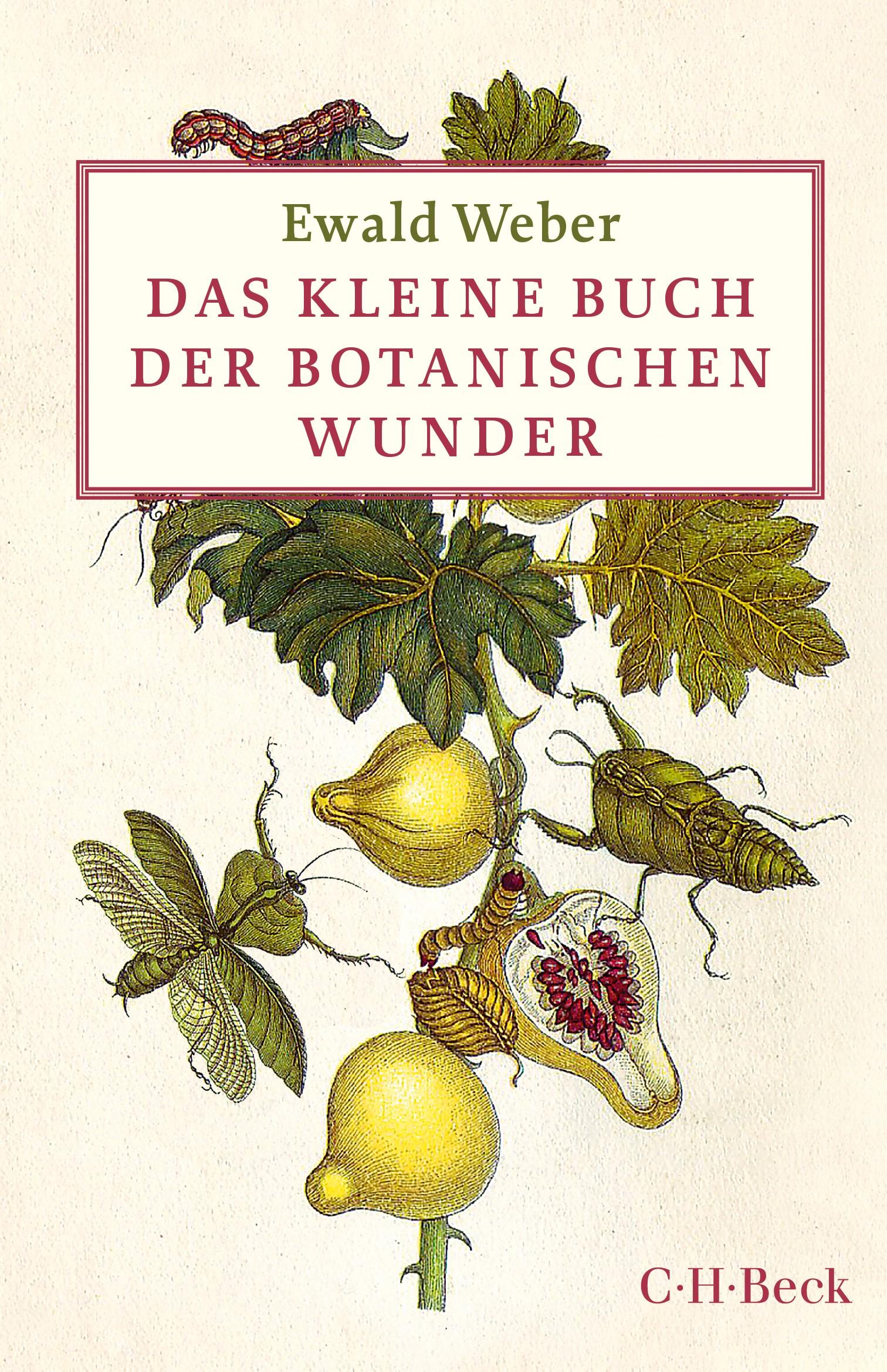 Cover des Buches 'Das kleine Buch der botanischen Wunder'