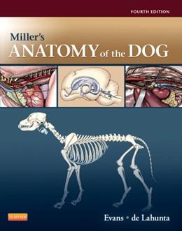 Abbildung von Evans / de Lahunta | Miller's Anatomy of the Dog | 2012