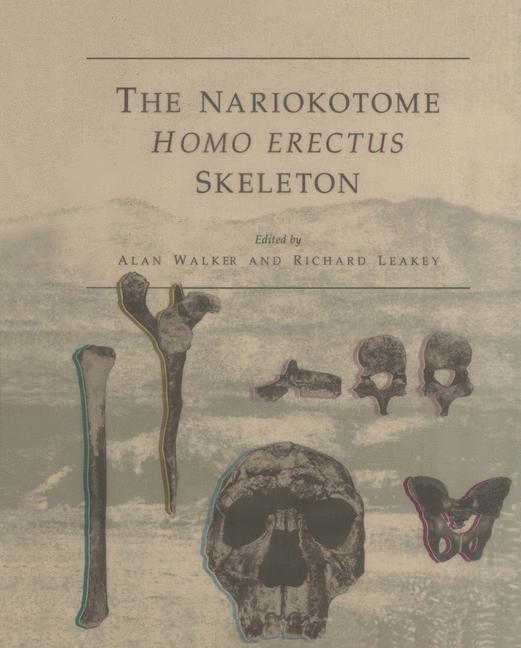Abbildung von Walker / Leakey | The Nariokotome Homo Erectus Skeleton | 1993