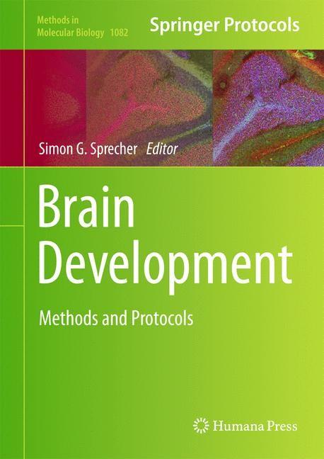 Abbildung von Sprecher | Brain Development | 2013
