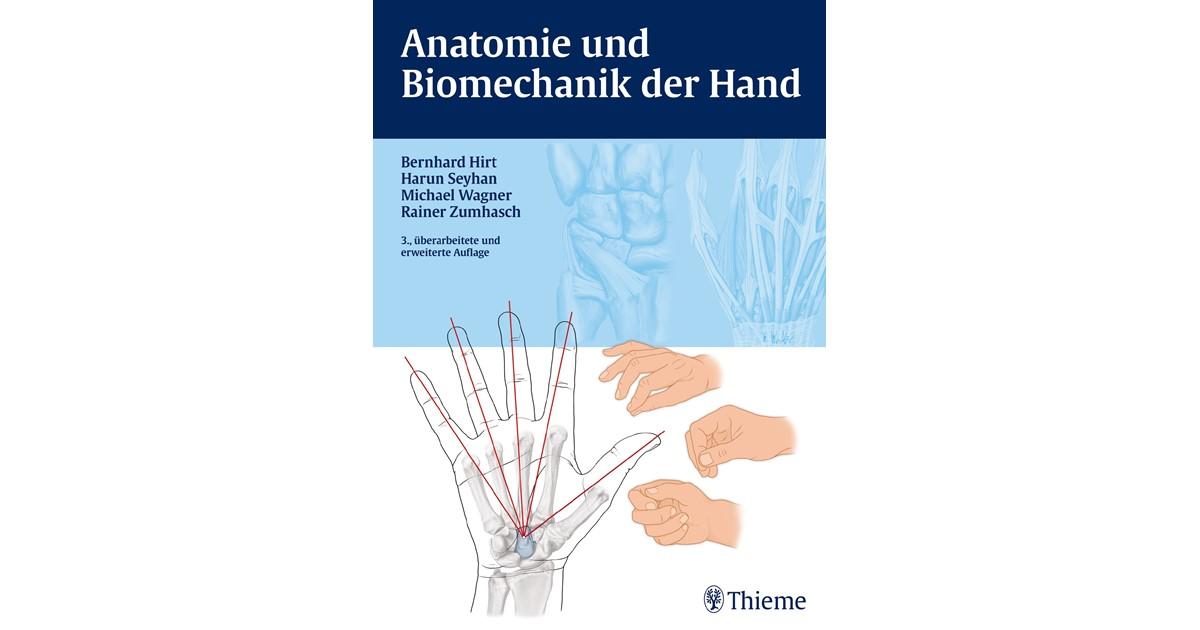 Berühmt Metatarsalkopf Anatomie Fotos - Menschliche Anatomie Bilder ...