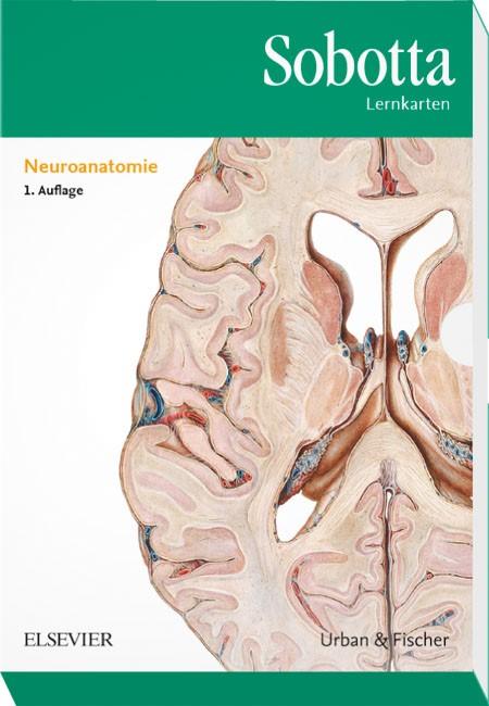 Sobotta Lernkarten Neuroanatomie | Bräuer / Scholz, 2016 (Cover)