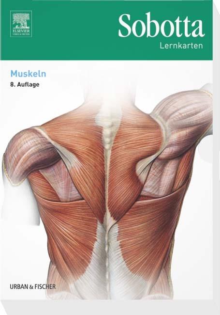 Sobotta Lernkarten Muskeln | Bräuer | 8. Auflage, 2016 (Cover)