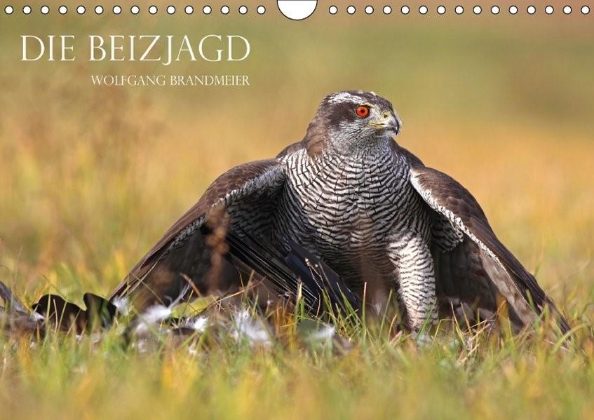 Die Beizjagd (Wandkalender 2018 DIN A4 quer) | Brandmeier | 6. Edition 2017, 2017 (Cover)
