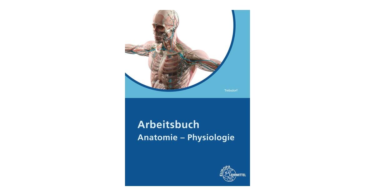 Beste Einheit 3 Anatomie Und Physiologie Zeitgenössisch ...