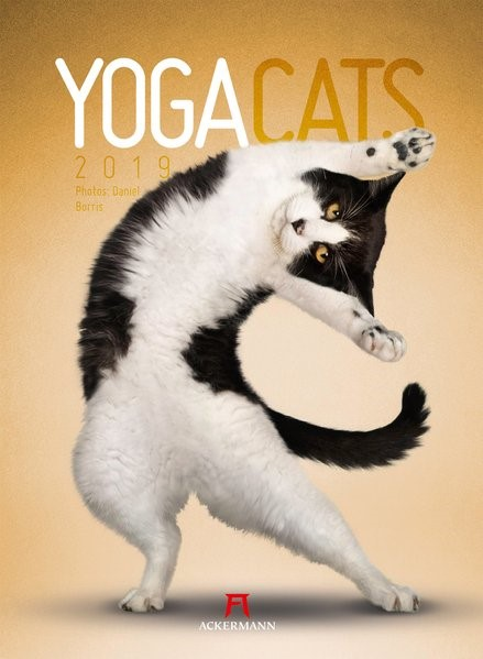 Yoga Cats 2019 | Borris, 2018 (Cover)
