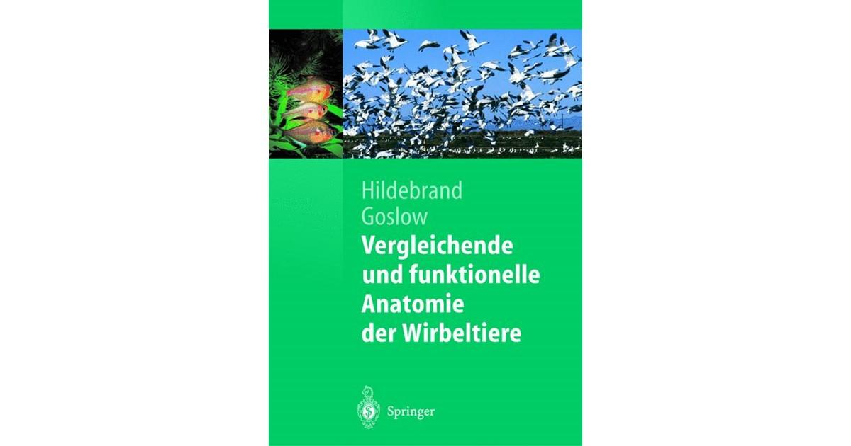 Ausgezeichnet Cerebellum Funktionelle Anatomie Fotos - Menschliche ...