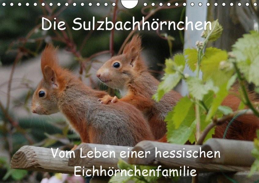 Die Sulzbachhörnchen - vom Leben einer hessischen Eichhörnchenfamilie (Wandkalender 2019 DIN A4 quer) | Adam | 5. Edition 2018, 2018 (Cover)