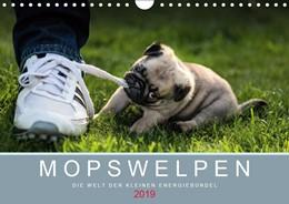 Abbildung von Dodeck | Mopswelpen (Wandkalender 2019 DIN A4 quer) | 3. Edition 2018 | 2018 | Mopswelpen - Die Welt der klei...