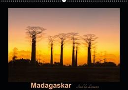 Abbildung von Kribus | Madagaskar - Insel der Lemuren (Wandkalender 2019 DIN A2 quer) | 3. Edition 2018 | 2018 | Aufnahmen von einzigartigen La...