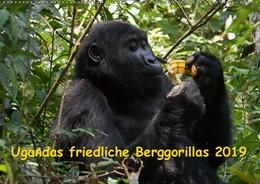 Abbildung von Krause | Ugandas friedliche Berggorillas (Wandkalender 2019 DIN A2 quer) | 3. Edition 2018 | 2018 | Habinyanja Gorillafamilie im U...