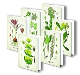 Abbildung von Quelle & Meyer Verlag | Kunstklappkarten
