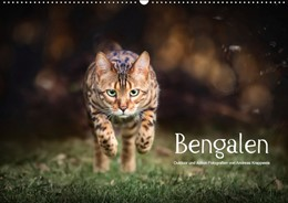 Abbildung von Krappweis | Bengalen Outdoor und Action (Wandkalender 2019 DIN A2 quer) | 2. Edition 2018 | 2018 | Bengalen, die kleinen Leoparde...