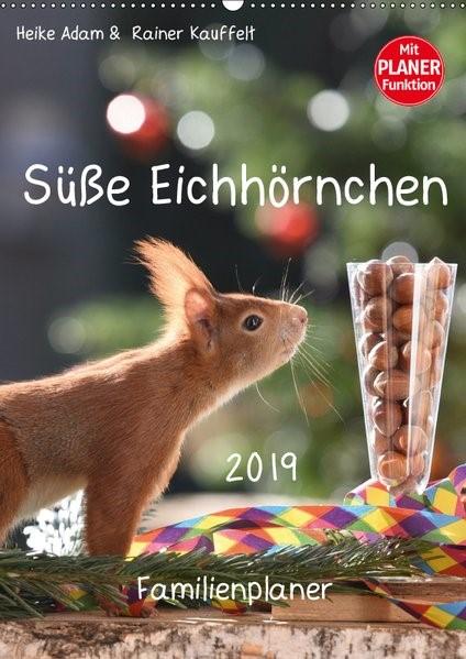 Abbildung von Adam | Süße Eichhörnchen (Wandkalender 2019 DIN A2 hoch) | 2. Edition 2018 | 2018