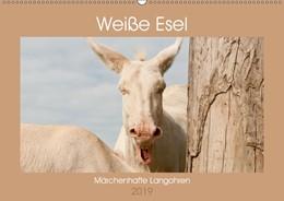 Abbildung von Bölts | Weiße Esel - Märchenhafte Langohren (Wandkalender 2019 DIN A2 quer) | 2. Edition 2018 | 2018 | Lichtbringer Barockesel (Monat...