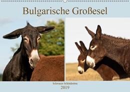 Abbildung von Bölts | Bulgarische Großesel - Schwarze Schönheiten (Wandkalender 2019 DIN A2 quer) | 3. Edition 2018 | 2018 | Traumhafte Fotos anmutiger Lan...