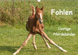 Abbildung von Bölts | Fohlen - Lustige Pferdekinder (Wandkalender 2019 DIN A3 quer) | 4. Edition 2018 | 2018 | Wundervolle Momentaufnahmen vo...