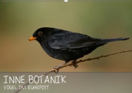 Abbildung von Krebs | INNE BOTANIK - Vögel im Ruhrpott (Wandkalender 2019 DIN A2 quer) | 7. Edition 2018 | 2018 | 12 Monate lang ein Foto aus de...