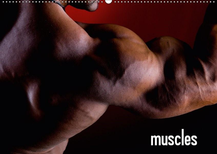 Abbildung von Mende | muscles (Wandkalender 2019 DIN A2 quer) | 6. Edition 2018 | 2018