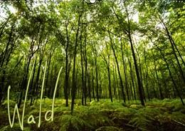 Abbildung von Gimpel | Wald (Wandkalender 2019 DIN A2 quer) | 6. Edition 2018 | 2018 | Wälder verzaubern mit einzigar...