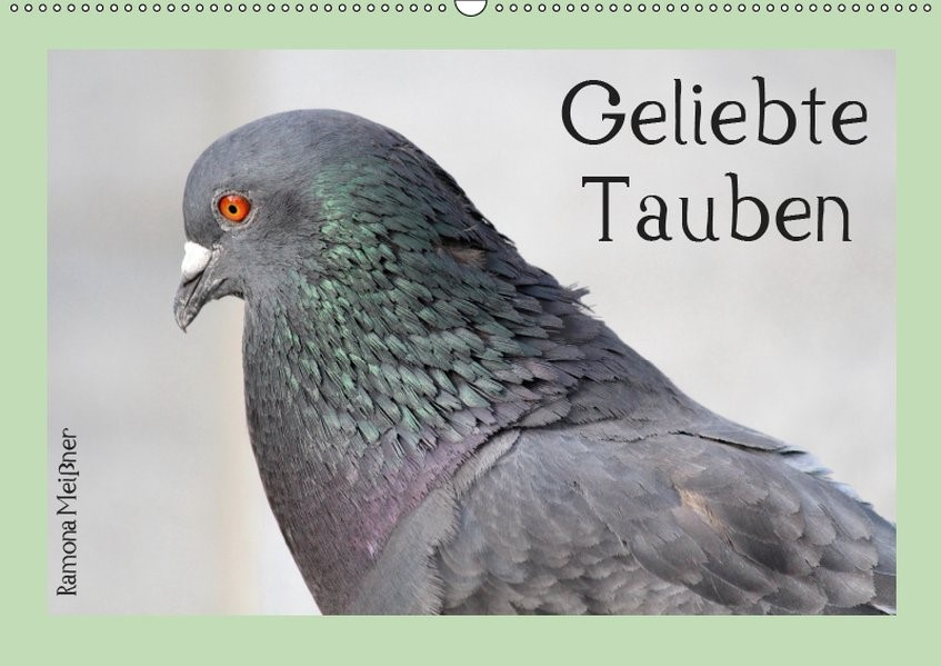 Abbildung von Meißner   Geliebte Tauben (Wandkalender 2019 DIN A2 quer)   6. Edition 2018   2018