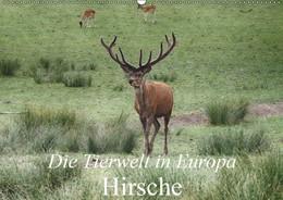 Abbildung von Kretschmann   Die Tierwelt in Europa - Hirsche (Wandkalender 2019 DIN A2 quer)   5. Edition 2018   2018