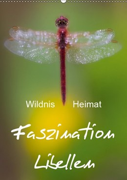 Abbildung von Böhme | Faszination Libellen - Wildnis Heimat (Wandkalender 2019 DIN A2 hoch) | 5. Edition 2018 | 2018 | Makrofotografie der Extraklass...