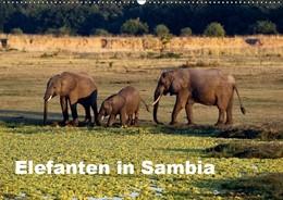 Abbildung von Krause   Elefanten in Sambia (Wandkalender 2019 DIN A2 quer)   4. Edition 2018   2018   Die Elefanten im South Luangwa...