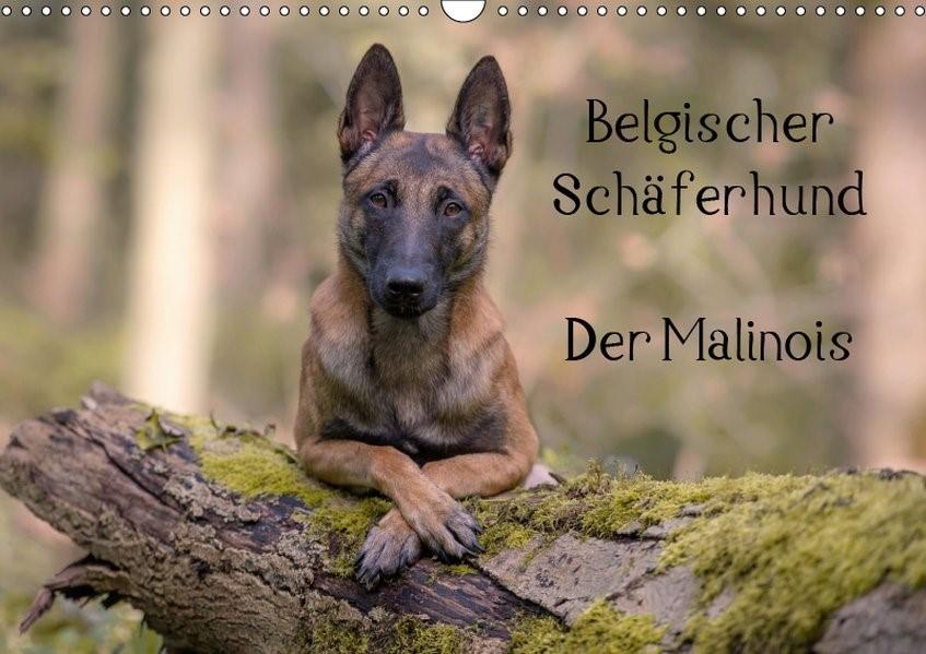 Belgischer Schäferhund - Der Malinois (Wandkalender 2019 DIN A3 quer)   Brandt   5. Edition 2018, 2018 (Cover)
