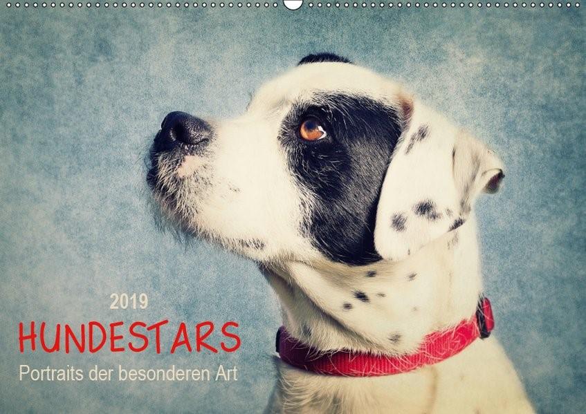 Abbildung von Dölling   Hundestars - Portraits der besonderen Art (Wandkalender 2019 DIN A2 quer)   3. Edition 2016   2016