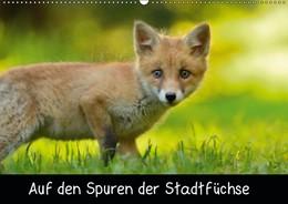 Abbildung von Krämer   Auf den Spuren der Stadtfüchse (Wandkalender 2019 DIN A2 quer)   1. Edition 2018   2018   Füchse in der Stadt (Geburtsta...