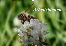 Abbildung von Kretschmann | Arbeitsbienen (Wandkalender 2019 DIN A2 quer) | 5. Edition 2018 | 2018 | Bienen bei der Arbeit zu beoba...