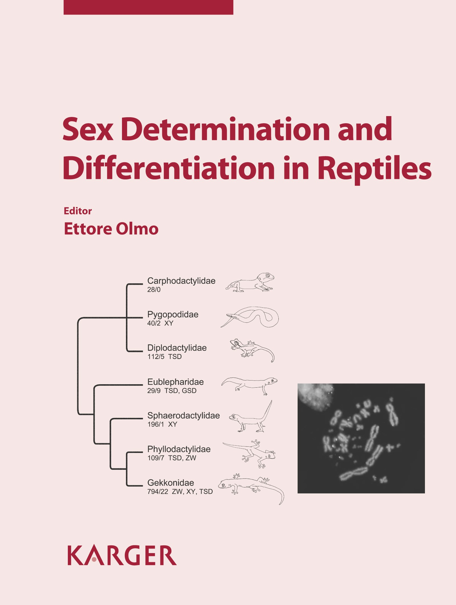 Sex Determination and Differentiation in Reptiles | Olmo, 2010 | Buch (Cover)