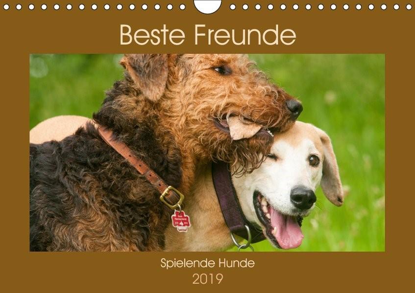 Abbildung von Bölts | Beste Freunde - Spielende Hunde (Wandkalender 2019 DIN A4 quer) | 1. Edition 2018 | 2018