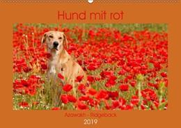 Abbildung von Bölts | Hund mit rot - Azawakh - Ridgeback (Wandkalender 2019 DIN A2 quer) | 1. Edition 2018 | 2018 | Fabelhafte Hundebilder (Monats...