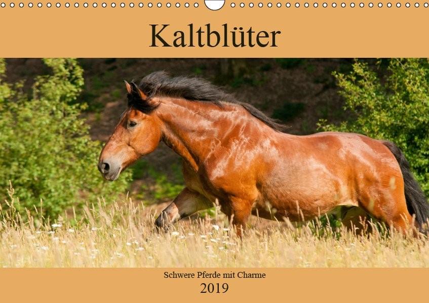 Abbildung von Bölts | Kaltblüter - Schwere Pferde mit Charme (Wandkalender 2019 DIN A3 quer) | 1. Edition 2018 | 2018