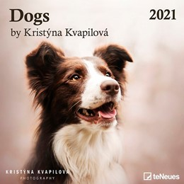 Abbildung von Dogs by Kristýna Kvapilová 2021 - Wand-Kalender - Broschüren-Kalender - Hunde   2020