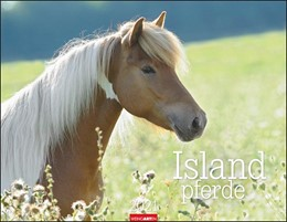 Abbildung von Weingarten | Islandpferde - Kalender 2021 | 2020