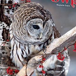 Abbildung von Magic Owls 2021 | 2020 | Magische Eulen