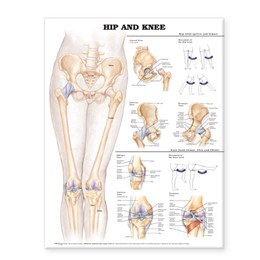 Abbildung von Hip and Knee Anatomical Chart | Second | 2004