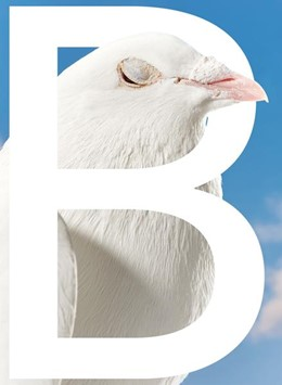 Abbildung von Duque / Egle   B-SIDES   1. Auflage   2020   beck-shop.de