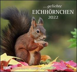 Abbildung von Geliebte Eichhörnchen 2022 - DuMont Wandkalender | 1. Auflage | 2021 | beck-shop.de