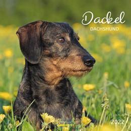Abbildung von Dackel 2022 | 1. Auflage | 2021 | beck-shop.de