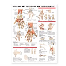Abbildung von Anatomy and Injuries of the Hand and Wrist Anatomical Chart | 2005
