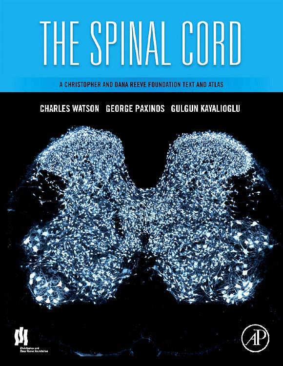 Abbildung von Watson / Paxinos / Kayalioglu   The Spinal Cord   2008