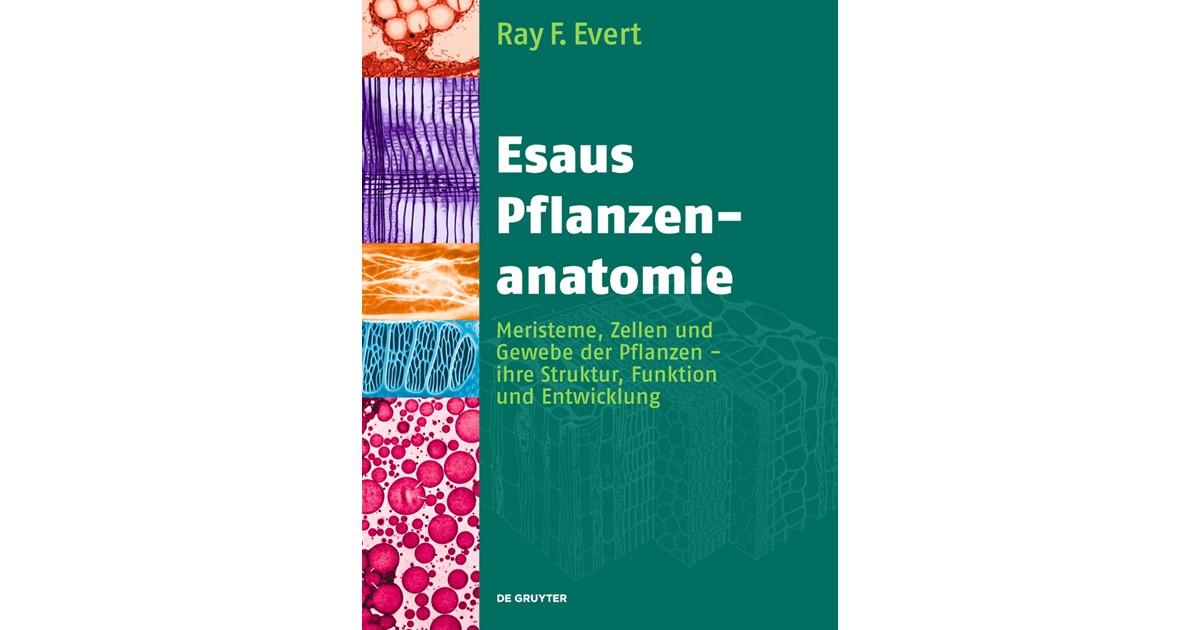 Esaus Pflanzenanatomie | Evert / Langenfeld-Heyser, 2009 | Buch ...