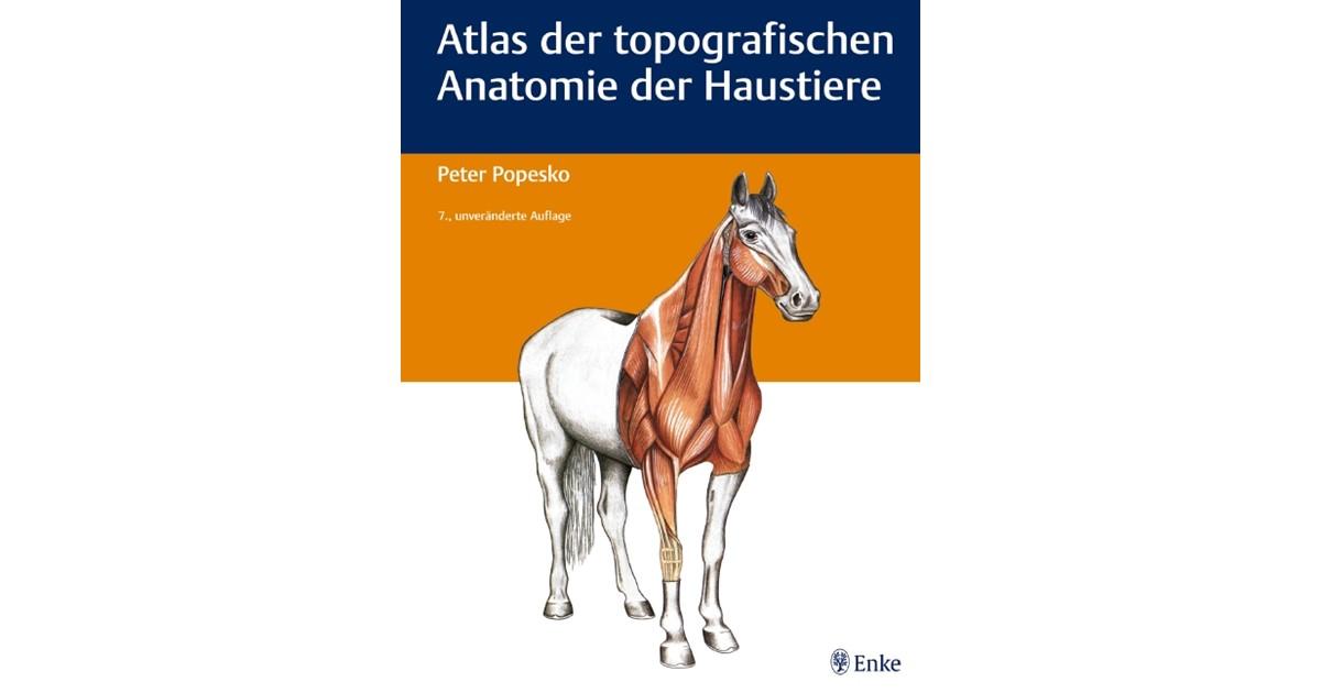 Atlas der topografischen Anatomie der Haustiere | 7., unveränd. Aufl ...